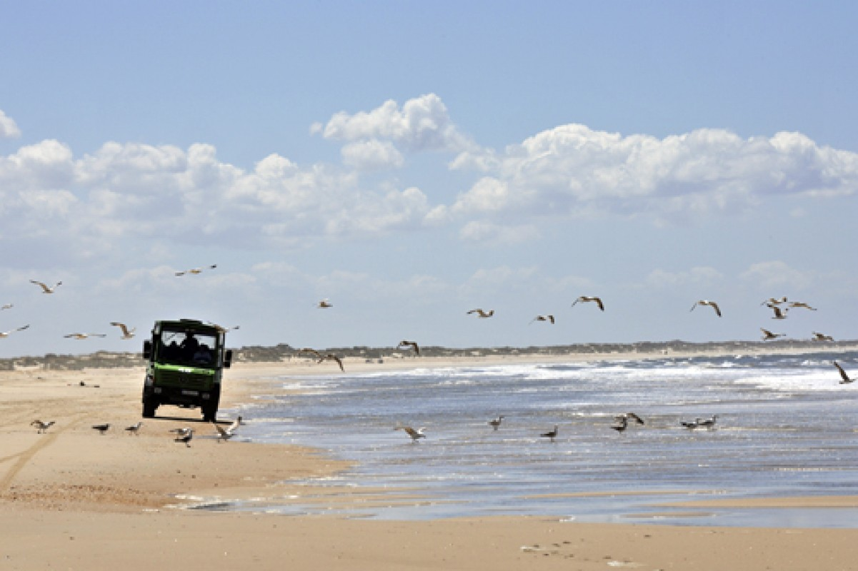 Visits to Doñana in off-road (Recommended)